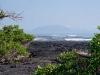 Galapagos 2001 - Punta Espinosa, Isla Fernandina