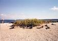 Punta Espinosa - Nesting grounds